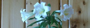 cropped-lilly2010-0021.jpg