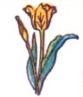 tulip-01