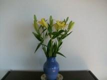 Lilies from a store - Ellen Grace Olinger