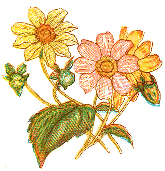clipart-pictures-6