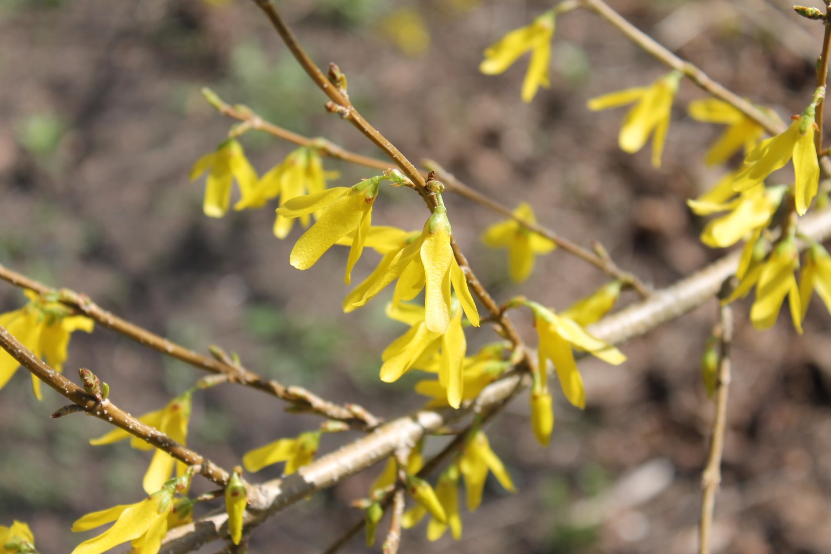Easter And Spring Poetry